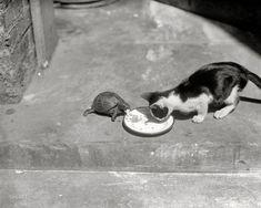 Friends dine together.