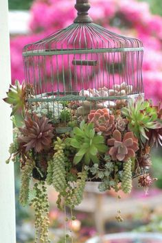 gartendekoration selber machen Sukkulenten im Käfig