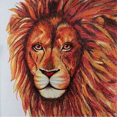 Today is World Lion Day, the perfect time to share this lovely chap from Wild Savannah, beautifully coloured by @zuzka.hanova. The Born Free Foundation work tirelessly to help save these amazing creatures. Head over to @bffoundation to find out how you can support their lion conservation projects and find out more about the great work they do.