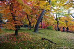 Autumn colors in Kyoto at Tofukuji (November 2012).