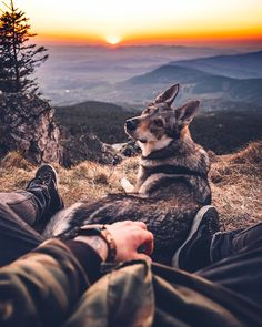 Happy and lazy Sunday, guys! We have the last 50 pieces of our Lightroom Presetspack 2018 for you! They will not resell again. Animals Of The World, Animals And Pets, Cute Animals, Cute Animal Memes, Hiking Dogs, Wolf Pictures, Mundo Animal, Wild Dogs, Dog Travel