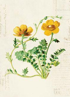 Vintage Botanical Floral on French Ephemera Print 8x10 P308 | Etsy Antique Illustration, Botanical Illustration, Room Wallpaper, Paper Texture, Botanical Art, Ephemera, Antiques, French, Prints