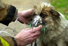 Firefighter administers oxygen to a small dog rescued from a fire. | Shared by LION