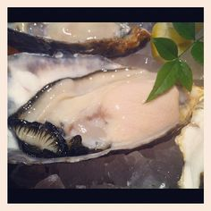 #oyster #oysters #牡蠣 #かき - @ogu_ogu- #webstagram