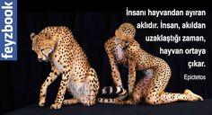 İnsanı hayvandan ayıran aklıdır. İnsan, akıldan uzaklaştığı zaman, hayvan ortaya çıkar. Epictetos
