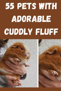 All animals are a gift from God, right? Well these pets might be the most precious gifts that anyone has ever received. They are fluffier than cotton and sweeter than candy, making them the perfect confections. Fluffy Animals, Cute Baby Animals, Airline Jobs, Best Butt Lifting Exercises, Funny Memes, Hilarious, Marriage Humor, Cute Comfy Outfits, Candy Making