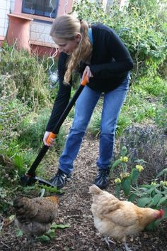 Fiskars UpRoot weeder-must have.  This is me someday with my chickens!