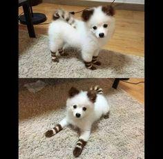 Ce chien est né avec des pantoufles Baby Animals Pictures, Cute Animal Pictures, Animals And Pets, Wild Animals, Cute Little Animals, Cute Funny Animals, Little Dogs, Cute Puppies, Cute Dogs