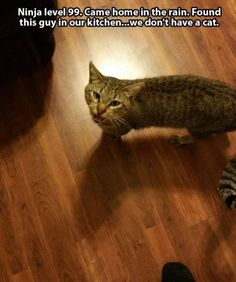 Cat Saturday: This is not my cat edition : theCHIVE