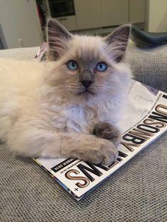 Ponsonby Cat! #MrMeowgi