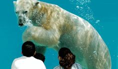 Lincoln Park Zoo, Brookfield Zoo & Shedd Aquarium - oh, my! | The Four Seasons Chicago