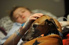 "Post Gazette photo of Greyhound ""Pet Friends"" visiting patients at Children's Hospital..."