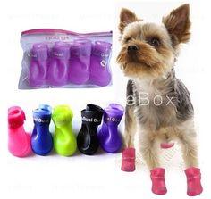 Cute doggie shoes