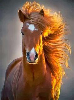 Só cavalo