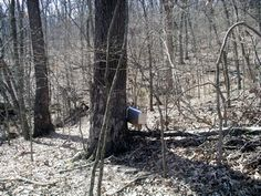Mailbox geocache, funny thing to find in the woods :)