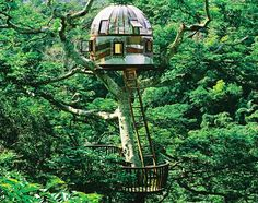 Beach Rock: Described as a 'plexiglass portal on the world', the Beach Rock tree house is located on private land in Okinawa, Japan