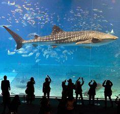 Dubai Mall Dubai Shopping Malls, Dubai Mall, Dubai Aquarium, Dubai Life, Dubai Travel, United Arab Emirates, Travel Goals, Abu Dhabi, Under The Sea