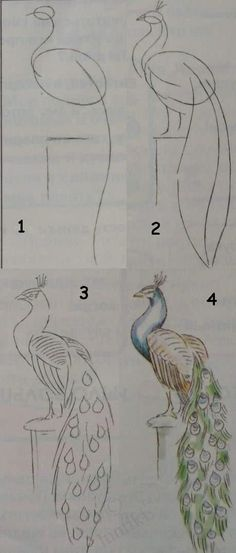Kids art Drawing lessons for beginners A PEACOCK How to draw Painting for kids Luntiks Crafts and&; Kids art Drawing lessons for beginners A PEACOCK How to draw Painting for kids Luntiks Crafts and&; Dominika Kob […] for beginners pencil Drawing Techniques, Drawing Tips, Drawing Sketches, Painting & Drawing, Drawing Ideas, Drawing Games, Drawing For Beginners, Pencil Art For Beginners, Beginner Sketches