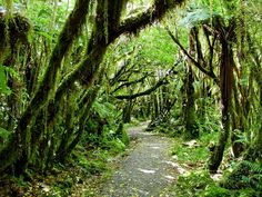 New Zealand Rain Forest. This website has lots of great nature pics! Oh The Places You'll Go, Places To Visit, Ultimate Travel, Nature Pictures, Rafting, The Great Outdoors, New Zealand, Paths, Nature Photography
