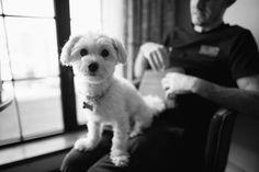 Bowery Hotel | Dog Groomsman