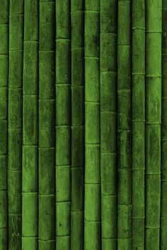 Greenery | Pantone Color of the Year 2017