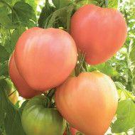 Seminte1 Marzano, Bulgaria, Vegetables, Canning, Vegetable Recipes, Veggies