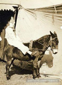 Donkey, Circus Donkey, Funny Donkey Pics  #HorseColicSymptomsFree www.loveyour.horse Circus Show Horses