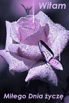 Beautiful butterfly animation on a lavender rose-gif