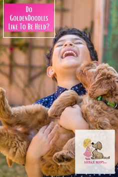 Goldendoodles absolutely love to be held and cuddled with. Goldendoodles are the closest you can get to having a live teddy bear. The closer they can be to their humans, the happier they are. Their hypoallergenic properties are icing on the cake.