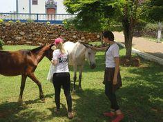 """O GRITO DO BICHO"": Resgate de animais vítimas do rompimento das barra..."