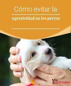 Cómo evitar la agresividad en los perros Tener un perro agresivo es algo peligroso que puede traer muchos problemas. En este artículo te mostraremos cómo evitar la agresividad en los perros.