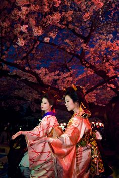 See the Cherry Blossoms at Night in beautiful & exotic Japan <3.