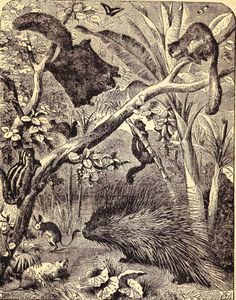 Rodents And Small Mammals (1887 Victorian Natural History Steel Engraving)