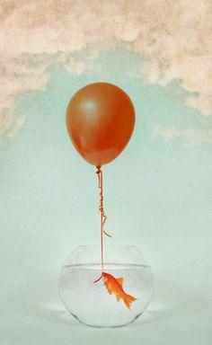 Still Life Photography, Art Photography, Balloon Words, The Great Escape, Diy Frame, Wine Glass, Balloons, Illustration Art, Art Prints
