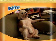 Madalenas sabe a… ¡tener el día libre!