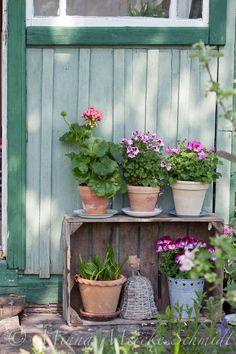Pallet or potato box makes a cute plant shelf Dream Garden, Garden Art, Garden Design, Back Gardens, Outdoor Gardens, Plant Shelves, Garden Accessories, Flower Boxes, Outdoor Projects