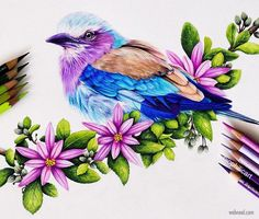 Pencil Drawings Of Animals, Bird Drawings, Colorful Drawings, Art Drawings Sketches, Realistic Animal Drawings, Horse Drawings, Color Pencil Sketch, Color Pencil Drawings, Pencil Drawing Pictures