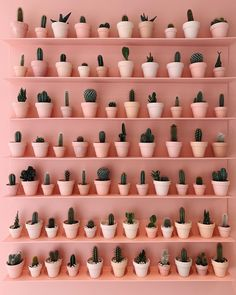 When your day turns out to be a bit of a write-off you bring out the pink cacti wall shake it off and get ready to start again tomorrow! Plant Wall, Plant Decor, Murs Roses, Paper Cactus, Plant Aesthetic, Aesthetic Style, Order Photos, Plant Shelves, Pink Walls