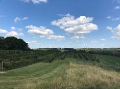 View of South Vineyard Sept 2018