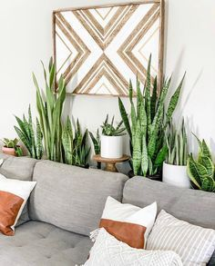 Plant Aesthetic, Aesthetic Rooms, House Plants Decor, Home Plants, Garden Plants, Garden Shrubs, Landscaping Plants, Shade Garden, Deco Floral