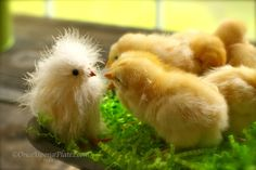haha! chix are smart- look at them checking out the imposter :-)