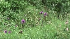 Wat is er leuker dan een wandeling maken, hier en daar een beetje bloemen te plukken, en daar gezamenlijk een overheerlijke maaltijd mee te maken? Voor wie dit leuk vindt ben je bij de Wildeman aan het juiste adres.