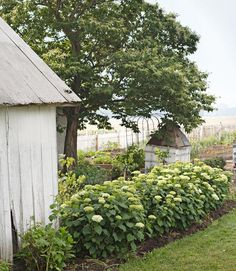 A hedge of 'Annabelle' hydrangeas encloses this herb garden. The small structure — painted white and ­covered with trellis panels — camouflages an unsightly well house.