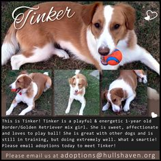 Little Tinker is looking for a home! Foster Parenting, 1 Year Olds, The Fosters, Congratulations, Adoption, Club, Dogs, Foster Care, Pet Dogs