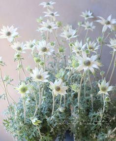 Herb Garden, Garden Art, Home And Garden, Green Flowers, Flower Beds, Horticulture, Planting Flowers, Flower Arrangements, Herbs