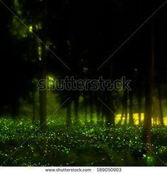 Firefly Stock Photo 189050921 : Shutterstock