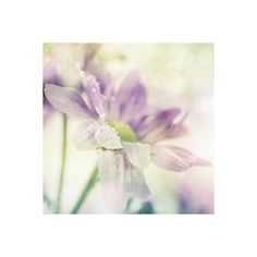 Beautiful nature - Dressed.ru ❤ liked on Polyvore featuring backgrounds, flowers, purple, photos and pictures