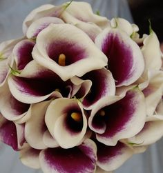 Flowers, White, Bouquet, Purple, Bridesmaids, Bridal, And, Calla, Mini, Callas, Monday morning flowers, Picasso