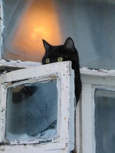 Black cat in a window.