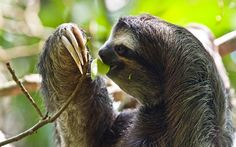 nice Sloth Free Download Picture